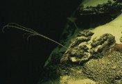 Разные: Как морские существа защищают нас от миллионов вирусов. Самый распространенный в океане организм выращивает вирус в своем ДНК
