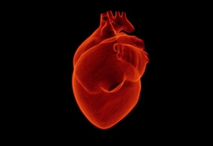 Невероятные факты о сердце, которые вы не знали