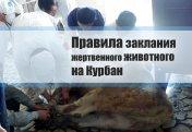 Правила заклания жертвенного животного на Курбан