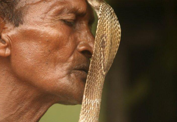 Индия: Женитьба мужчины на змее сорвалась