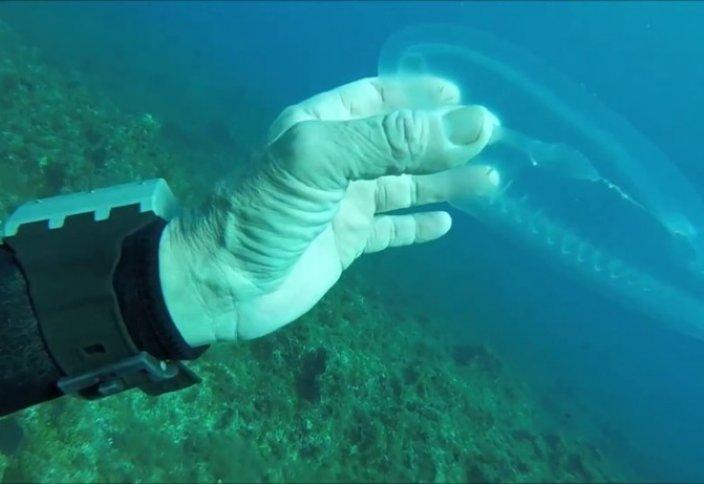 Ішек-қарны көрінетін мөлдір балық (видео)