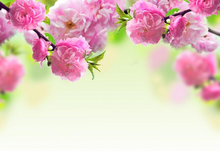 Любовь дочери Пророка — Зайнаб Аль-Кубра