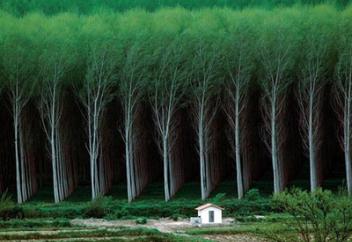 Благодаря Китаю и Индии Земля стала экологичнее, чем 20 лет назад (фото+видео)