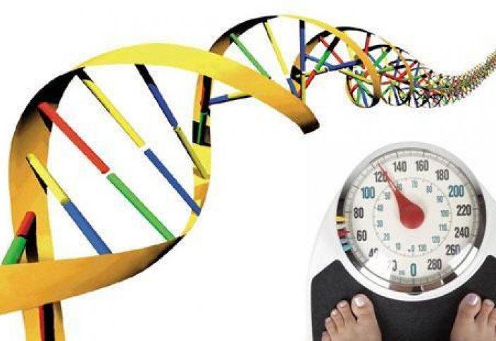 Семіруге бастайтын ген табылды