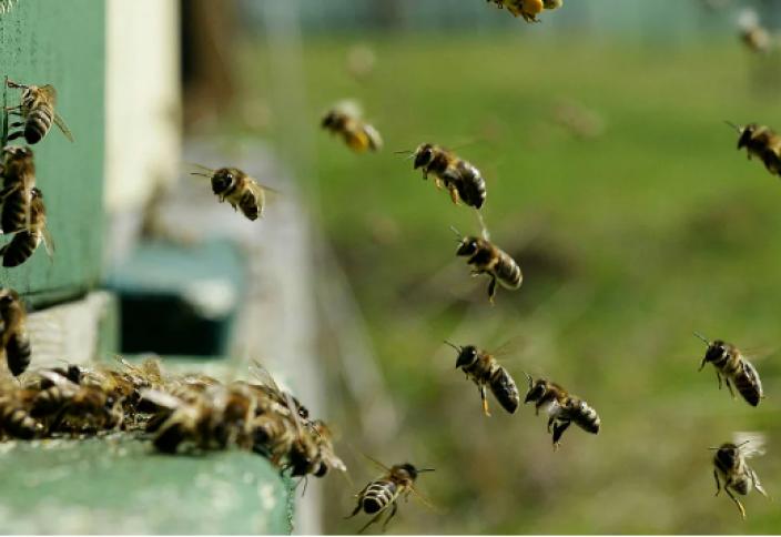Создана первая карта пчел по всему миру. Чем грозит человечеству исчезновение пчёл?