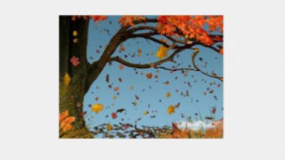 Откуда берется кислород зимой? Ведь деревья скидывают листву…