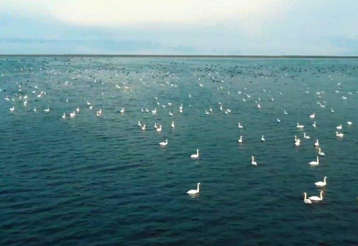 Автор ролика с фламинго на Караколе снял новое видео