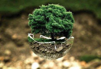 Дорогая земля