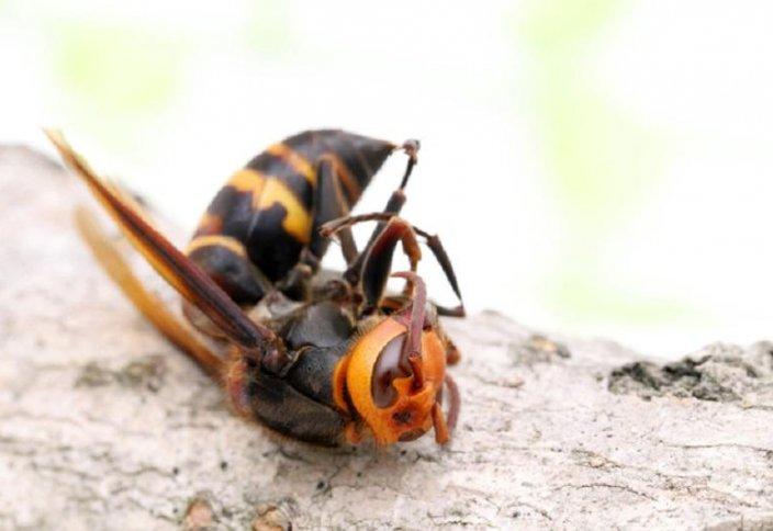 Жәндіктердің жойылу проблемасы біз ойлағаннан да ауқымды – ғалымдар