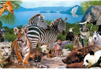 Мир животных: Побережье греческого острова Айтолико окутала паутина (видео)