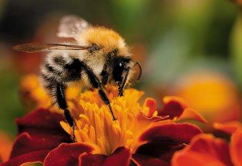 Пчёлы научат бизнесменов эффективно управлять бизнесом