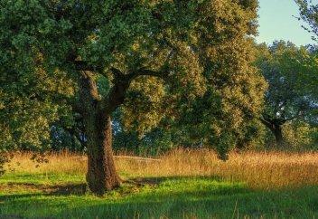 Два млрд деревьев высадят в Казахстане