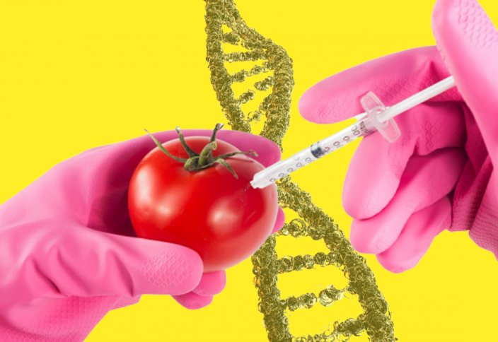 Ученые редактируют обычные продукты и добавляют им гены: это вкусно, полезно или опасно?