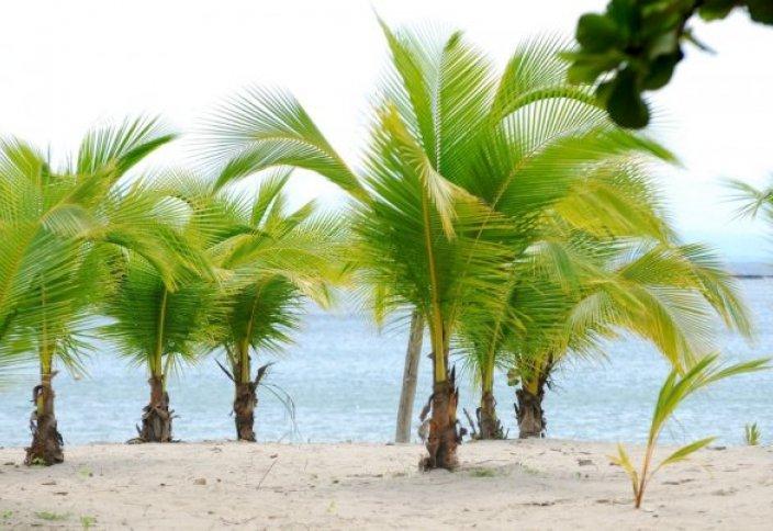 ОҚО-да голландық раушандар мен пальма өсіріледі