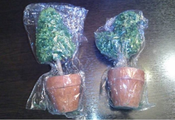 Өсімдіктер де пластикпен «қоректенетін» болып шықты