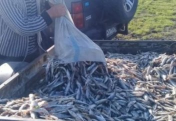 Жайықтан бір тонна өлі балық шығарылды (видео)