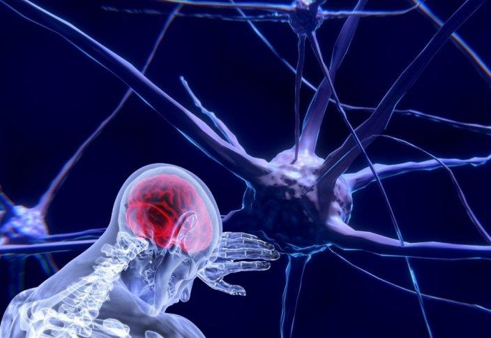 В теле человека нашли новый орган, отвечающий за боль