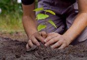 9 жыл ішінде Үндістанда 3,5 млн-нан аса ағаш отырғызылған