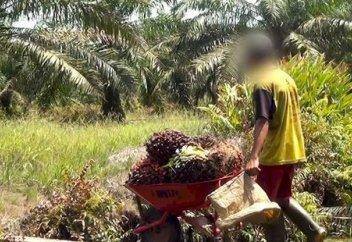 Пальма майы төңірегіндегі дау өршіп барады