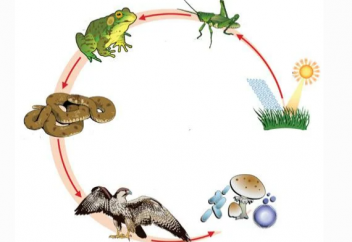 Ученые выявили, что экосистема Земли начала стремительно вымирать