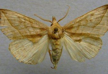 В Эстонии прижились бабочки, пьющие кровь и слезы перед оплодотворением