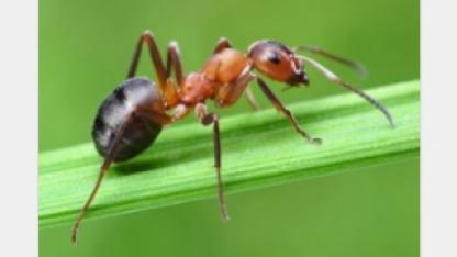 Даже муравей уповает на Бога (видео)