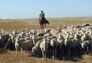 День животноводов появится в Казахстане