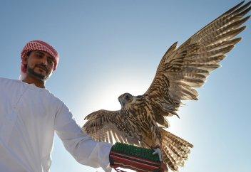 Арабским шейхам разрешили охотиться на краснокнижную птицу в Казахстане