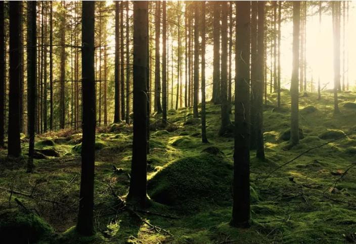 Быстрый рост деревьев оказался плохим сигналом для климата. Листья деревьев помогли измерить загрязнение воздуха