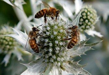 Инъекция превратила мирных пчел в смертельно опасных насекомых