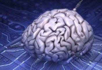 Найден источник врожденного интеллекта