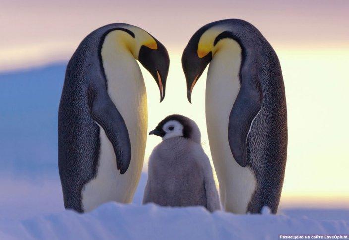Пингвин де сөйлейді, сөйлегенде не дейді?