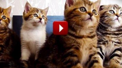 Просмотр видео с котиками ведет к деградации, заявил биолог