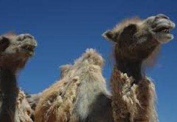 68 видов болезней животных включено в список особо опасных - Минсельхоз