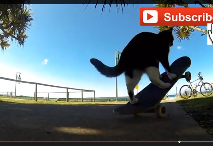 Жануарлар әлемі: «Скейтбордшы» мысық ғаламтор жұлдызына айналды (ВИДЕО)
