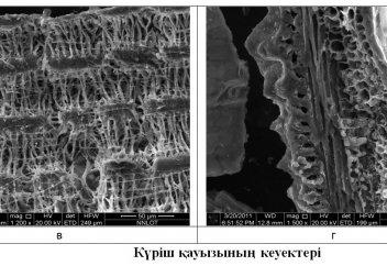 Ғалымдар күріш қауызынан арболит жасауға болатынын айтты