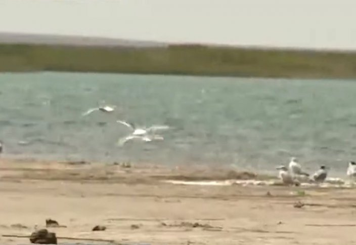 Арал өңіріндегі ең ірі көл тартылып барады (видео)