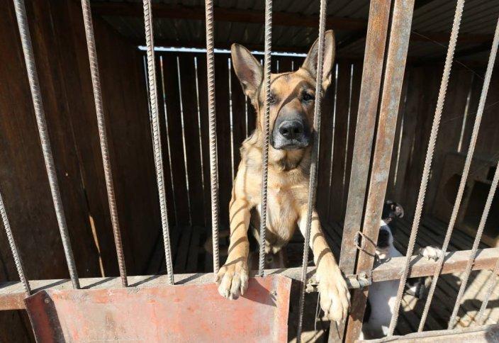 Требования к приютам для животных разработали в Казахстане. Казахстанцам нельзя будет убивать даже комаров, абсурд — эксперт о новом законе по защите животных