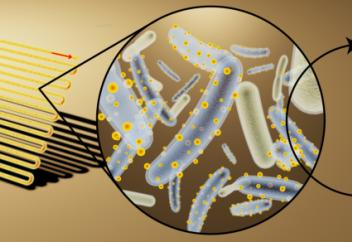 Созданы пожирающие свет бактерии-киборги