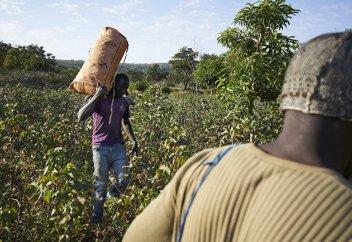 VivAfrik (Сенегал): Африка не может позволить себе пропустить генетическую революцию