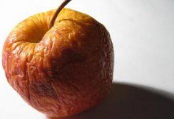 Учеными раскрыта одна из загадок старения