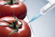 Құрамында ГМО-сы бар азық-түліктер халал ма?