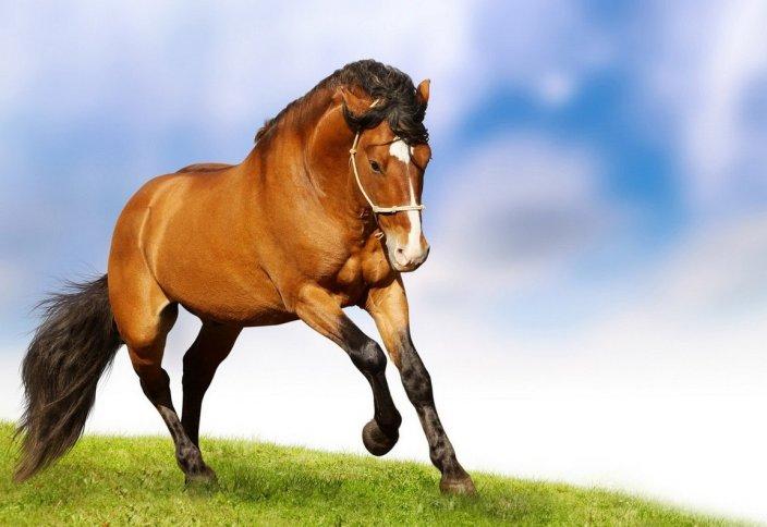 Почему лошадь не приносят в жертву - Курбан?