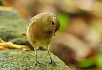 Три совета птицы