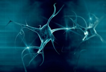 Мидың істен шыққан нейрондардан қалай құтылатыны белгілі болды (видео)
