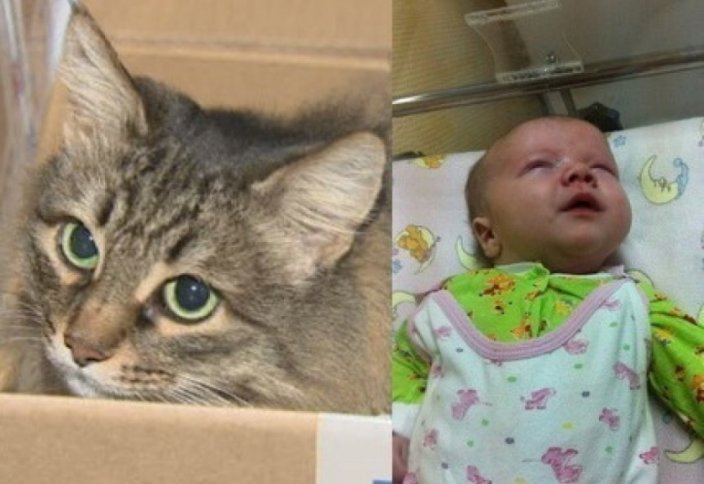 Кошка спасла ребенка-подкидыша (видео)