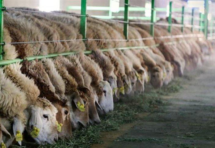 Иран открыл крупнейшую промышленную животноводческую ферму недалеко от Тегерана