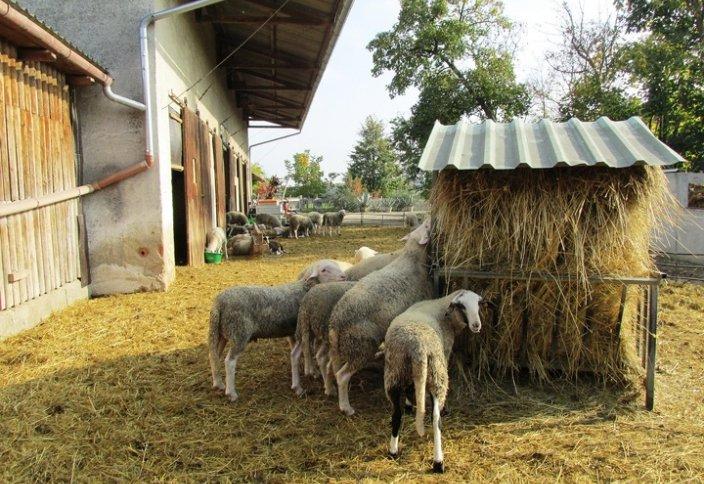 Как бактерии помогают развивать животноводство
