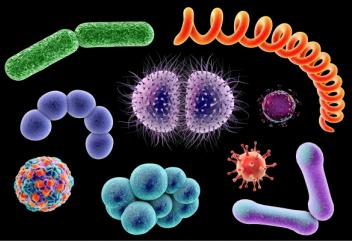 Вирусы, бактерии и грибки находятся за пневмонией. Знай свои первые симптомы вовремя
