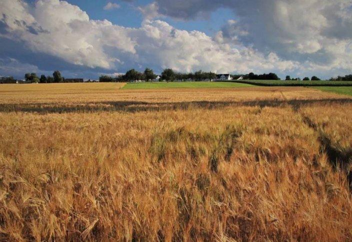 В селе в СКО шесть лет живет только один человек (видео)